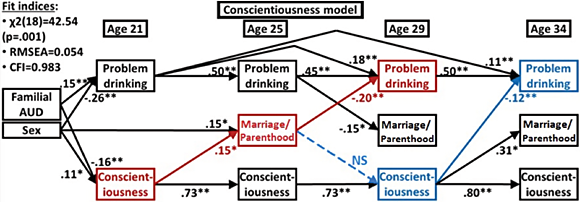 Graphic showing An integrative model of family-role and personality effects on young adult maturing out of problem drinking, showing results of a cross-lagged panel model of marriage and parenthood, conscientiousness, and problem drinking across four longitudinal time points. Results of cross-lag models showed some prospective effects of personality on problem drinking, with higher conscientiousness at age 29 predicting lower problem drinking at age 34. Family-role transitions mediated personality effects, with higher conscientiousness at age 21 predicting transitions into a family role by age 25, which in turn predicted lower problem drinking at age 29.